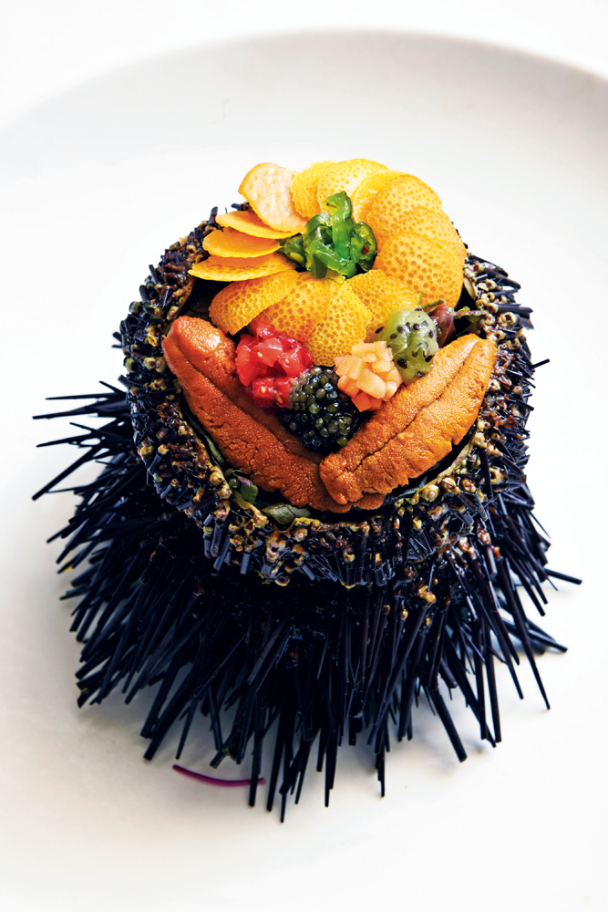 Polynesian Sea Urchin